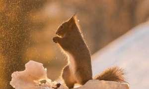 松鼠中暑症状及防治方法